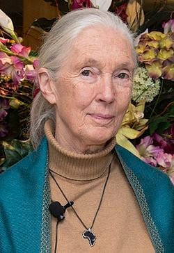 Jane Goodall Quotes