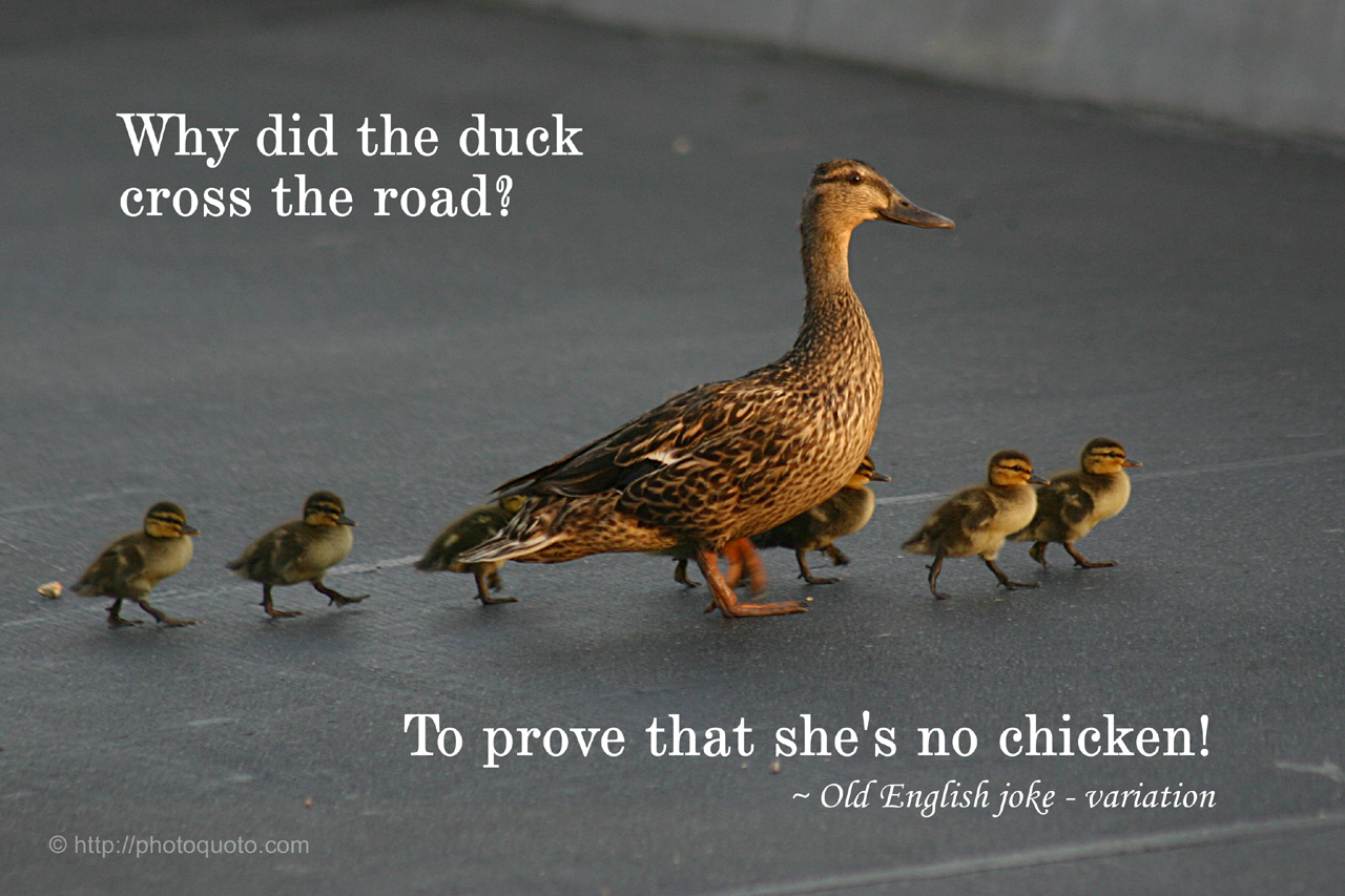 Chicken Quote: Chicken Quotes And Sayings. QuotesGram