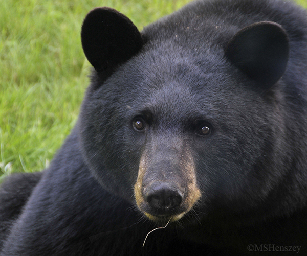 Smiletodaytees Funny Black Bear Hug Dealer T-shirt-RT ... |Funny Black Bear Family