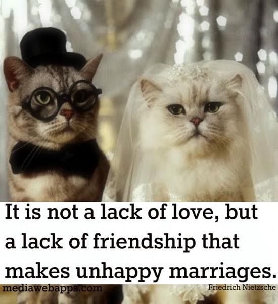 Senior Cat Quotes: Cat Lover Quotes. QuotesGram