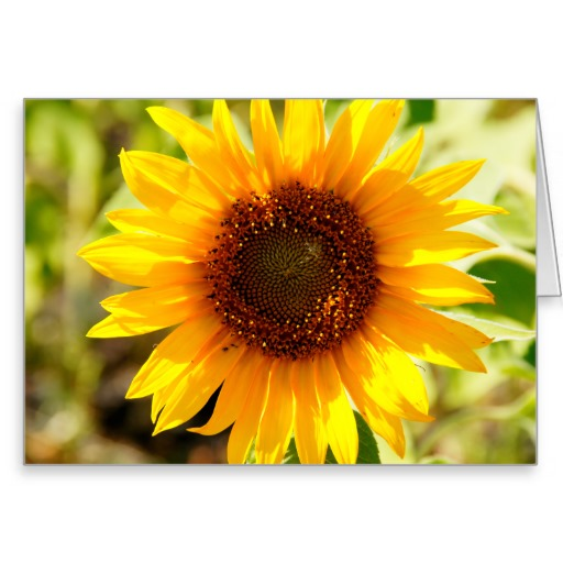 Sunflower Bible Quotes. QuotesGram