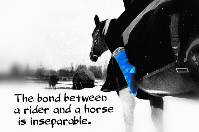 quotes about the relationship between horse and rider