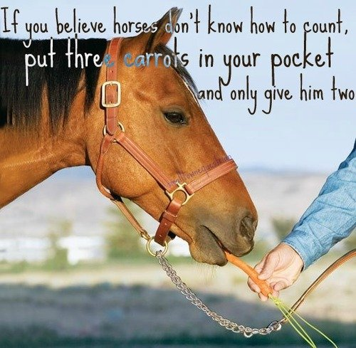 Witty Quotes With Pictures: Funny Horse Quotes And Sayings. QuotesGram