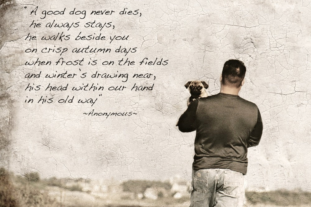 When A Pet Dies Quotes Quotesgram