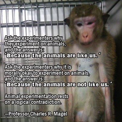 Animal testing should be banned in the us
