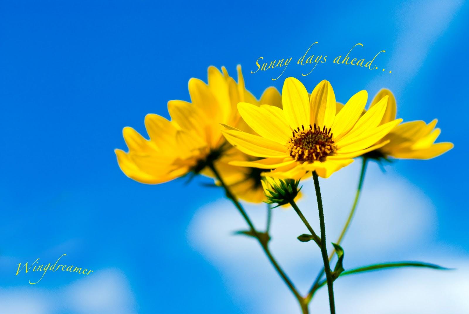 Beautiful Colorful Autumn Park Sunny Day Stock Photo ...  |Sunny Beautiful Day