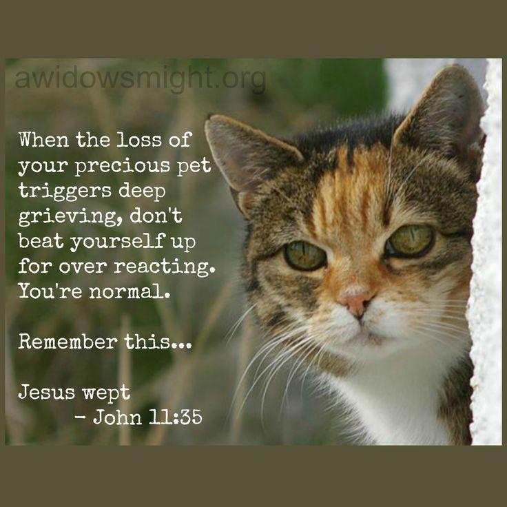 Prayer Quotes For Death In Family: Cat Prayer Quotes. QuotesGram
