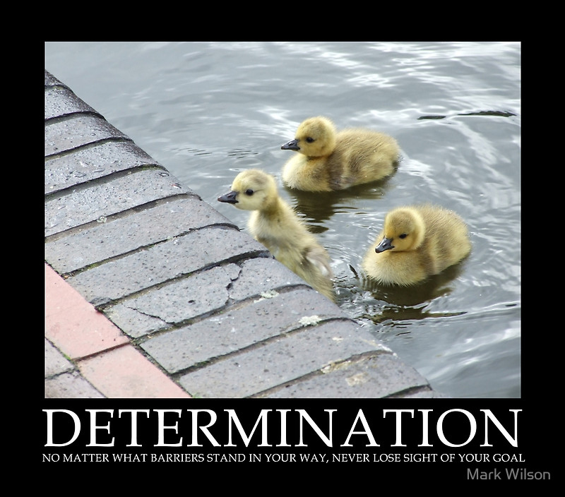 Persistence Motivational Quotes: Determination Quotes And Sayings. QuotesGram