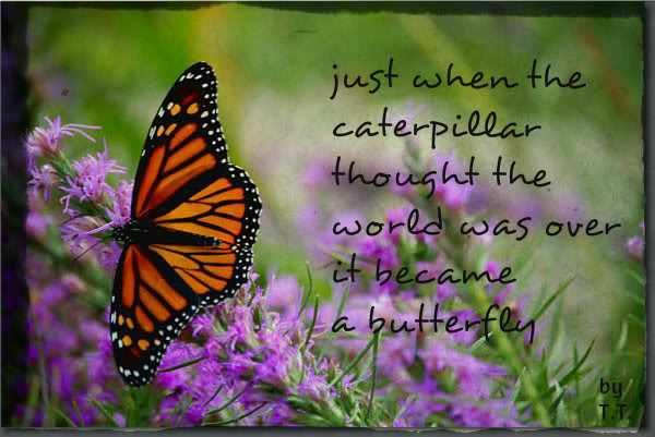 Caterpillar Butterfly Birthday Quotes Quotesgram