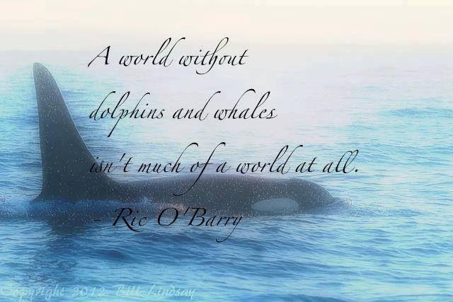 Killer Whale Quotes Quotesgram