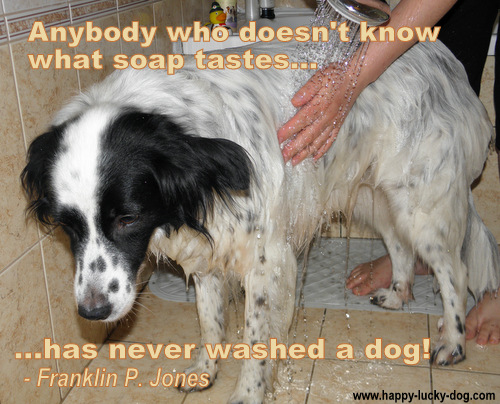 When A Dog Dies Quotes Quotesgram: Putting Down A Dog Quotes. QuotesGram