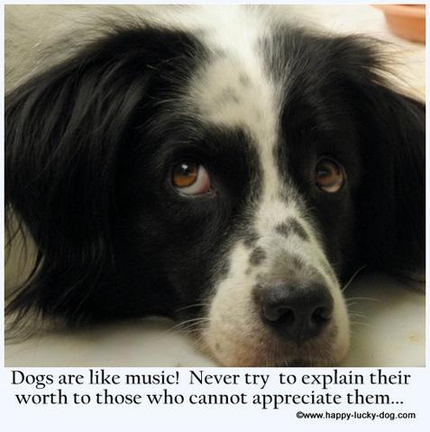 dog motivational quotes quotesgram