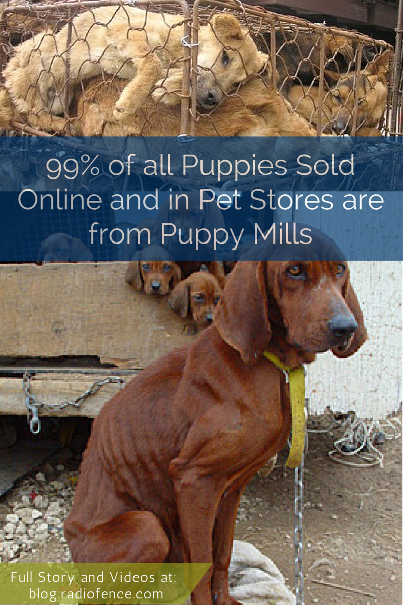 Puppy Mill Quotes Quotesgram