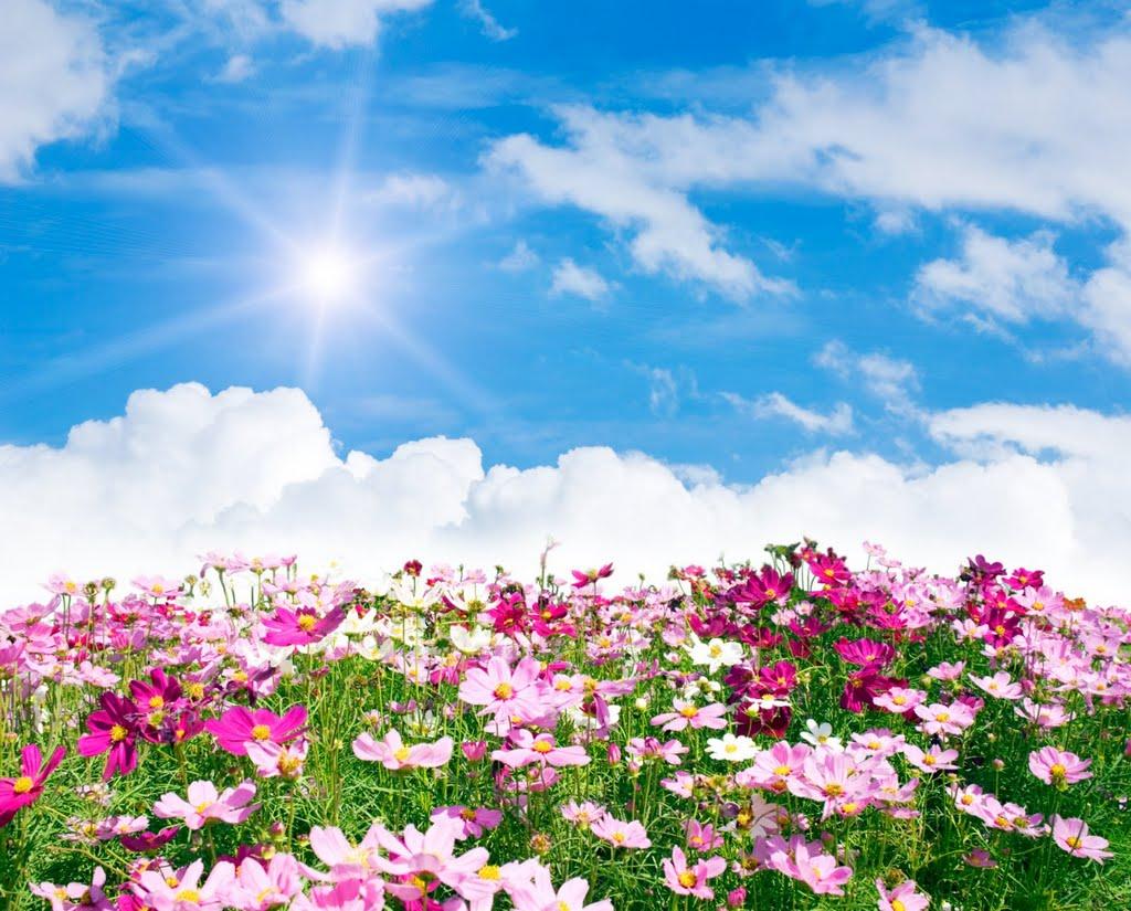 Beautiful Sunny Day Quotes. QuotesGram