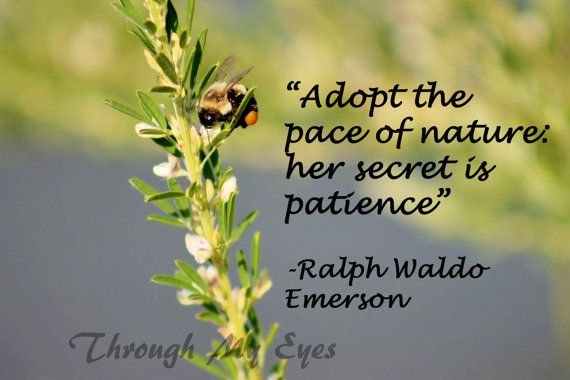 Bee Quotes: Bee Quotes And Slogans. QuotesGram