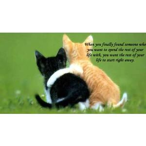 love quotes life partner quotesgram