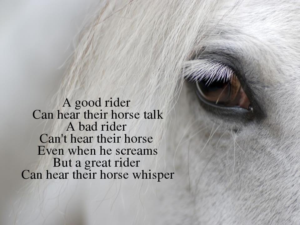 Horse Eye Quotes. QuotesGram Horses Eyes Quotes