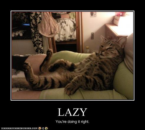 Lazy Cat Quotes Quotesgram