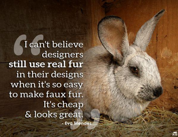 Animal Research Essay
