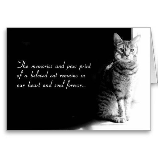Loss Of Pet Quotes For Dogs: Pet Loss Quotes Cats. QuotesGram