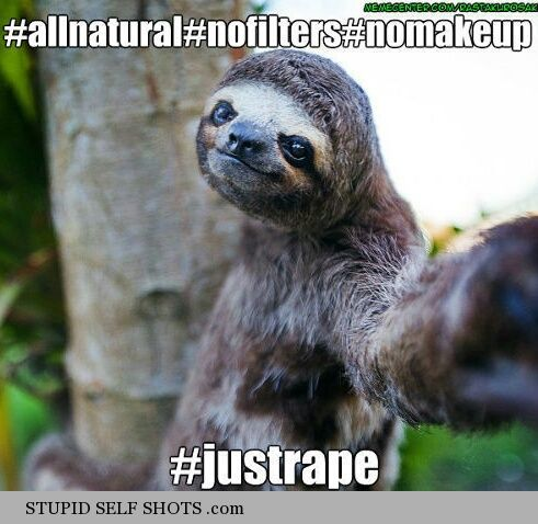 Sloth Animal Funny Quotes Quotesgram