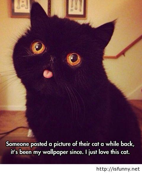 Black Cat Quotes Quotesgram
