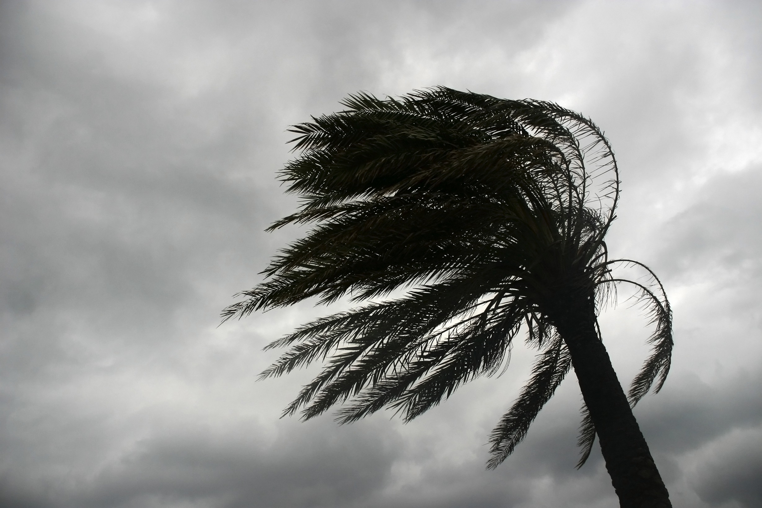 Palm Trees Windy Weather Quotes Quotesgram