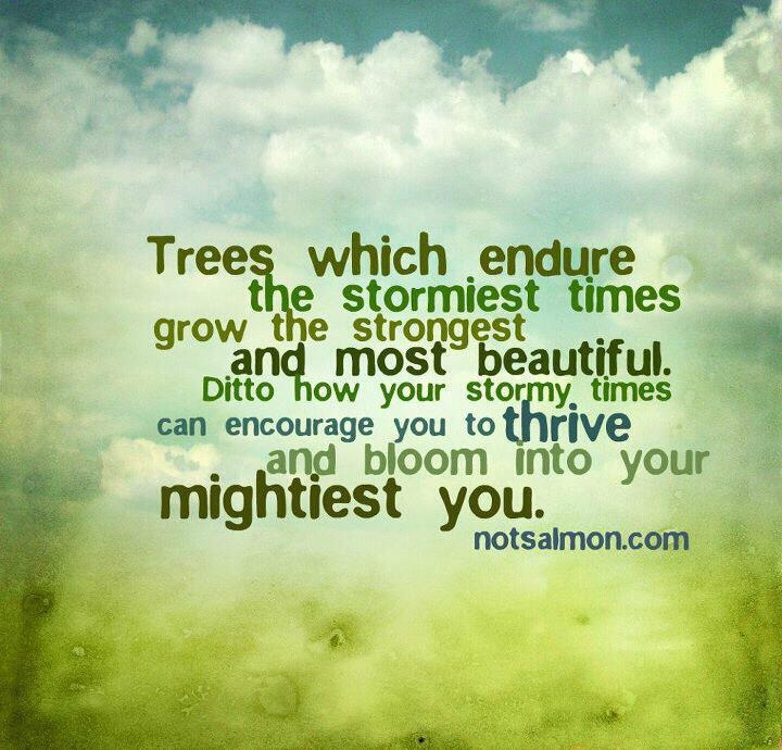 Quotes About Strength And Trees  Quotesgram
