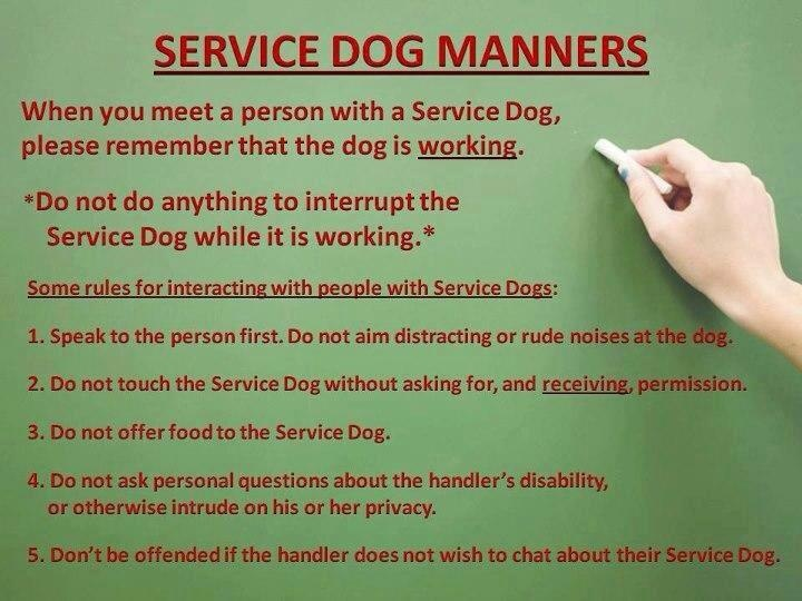 Quotes About Therapy Dogs. QuotesGram