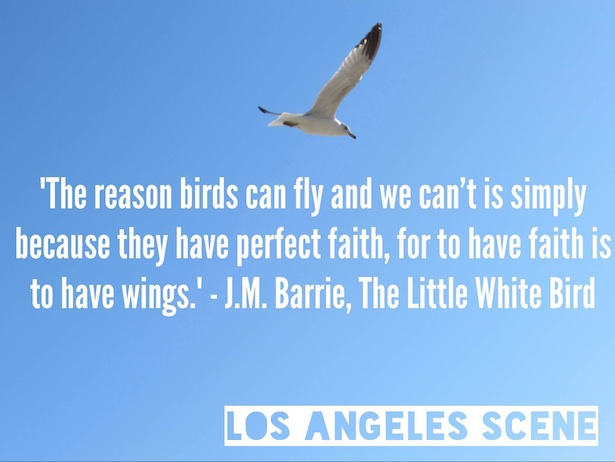 Quotes About Love And Birds Quotesgram: Inspirational Quotes Bird. QuotesGram