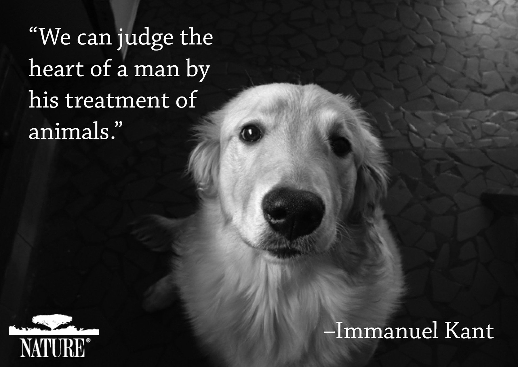 Famous Dog Quotes Love. QuotesGram