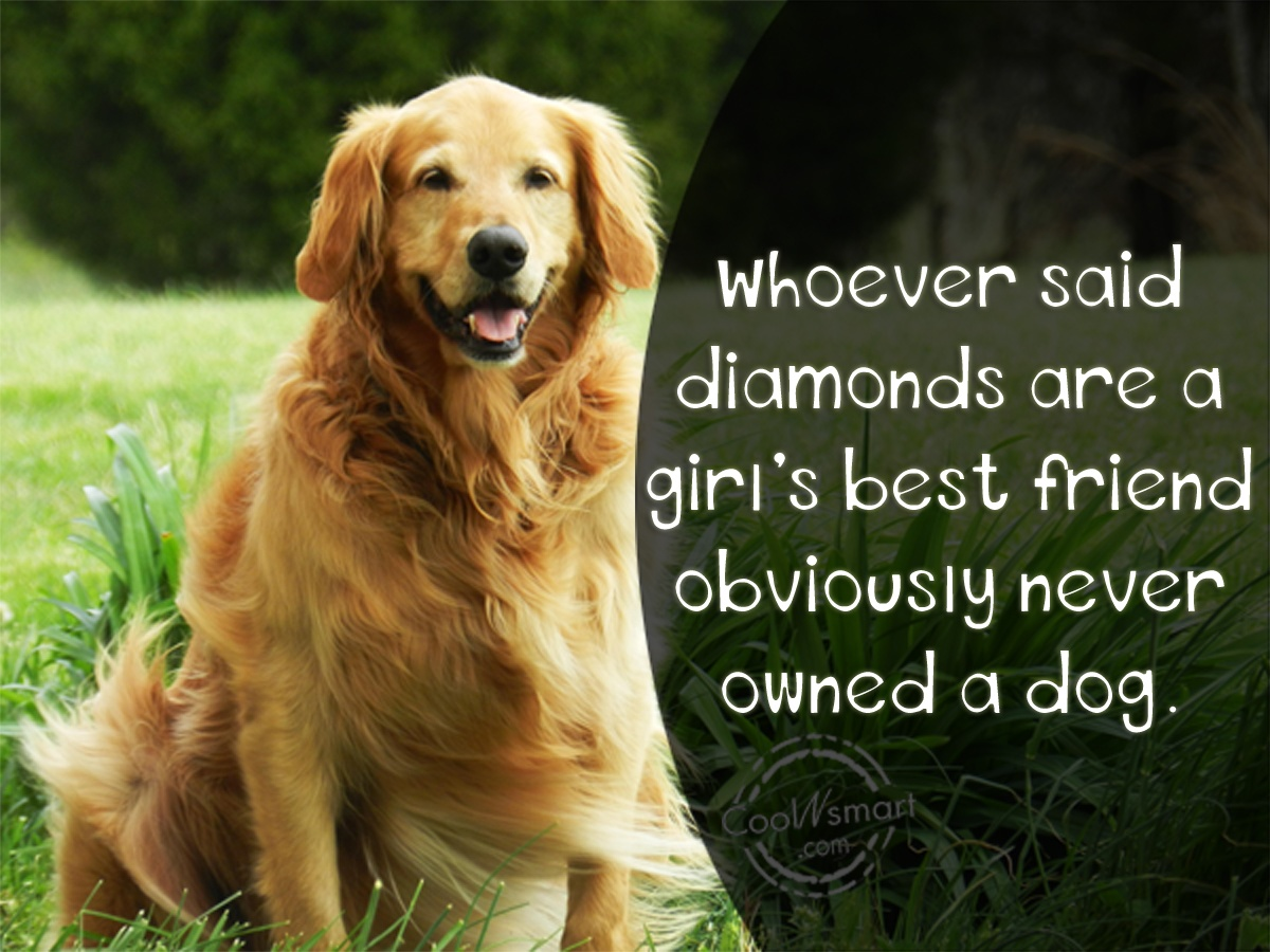 Whoever Said Diamonds Are A Girl S Best Friend Dog