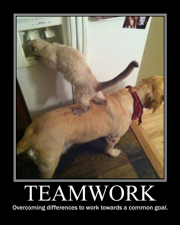 Funny Teamwork Quotes For Work Quotesgram