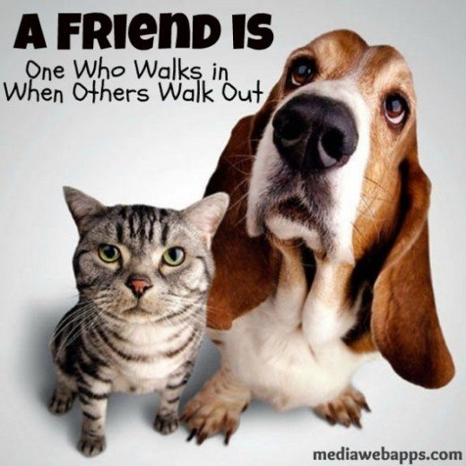 Friendship Quotes Cats: Cat And Dog Quotes. QuotesGram