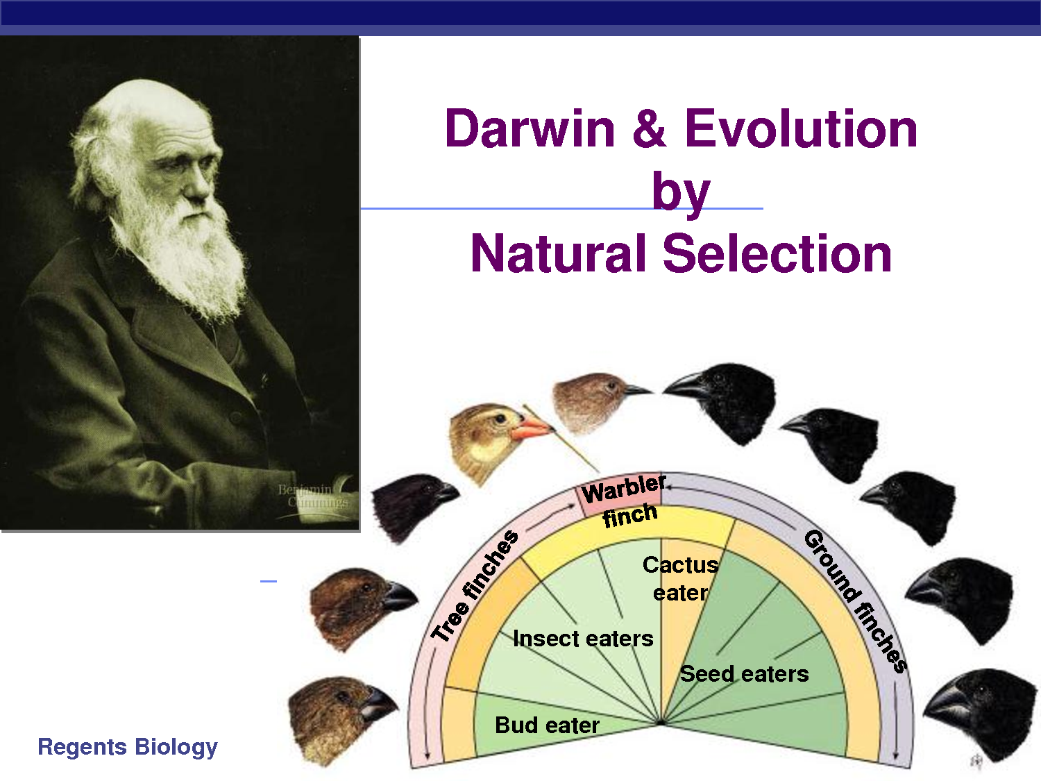 Darwin S Theory Of Natural Selection Through Evoution