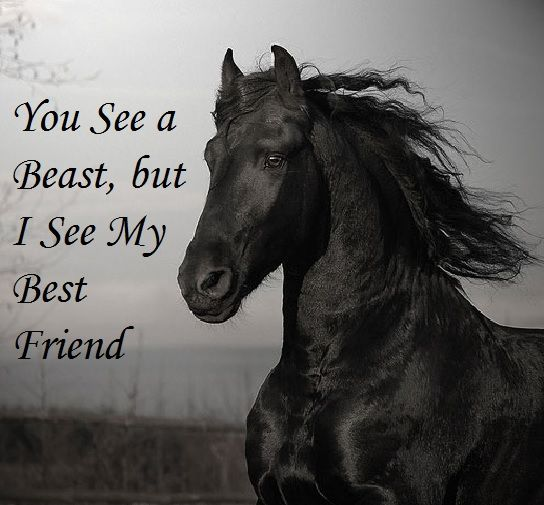 Black And White Horse Quotes. QuotesGram