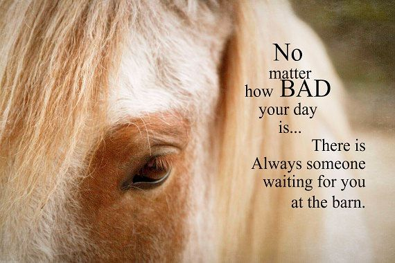 Inspirational Quotes For Horse Lovers. QuotesGram
