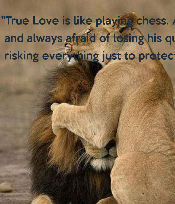 a king always protects his queen quotes quotesgram