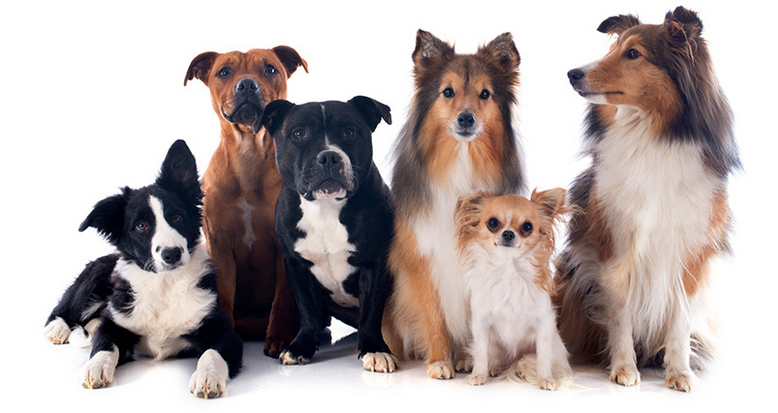 Dog Walking And Training Services