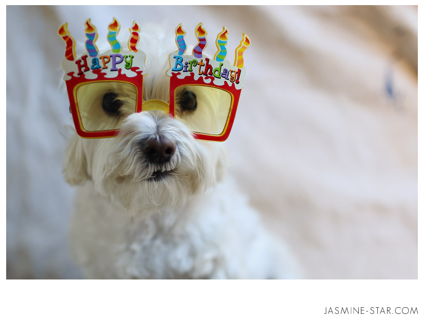 Dog Birthday Quotes Quotesgram Happy Birthday Wishes Dogs