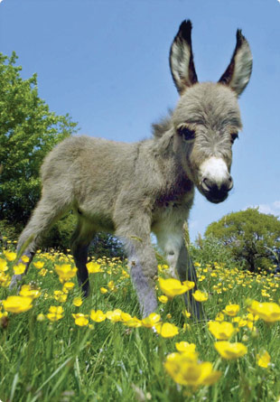 Cute Donkey Quotes. QuotesGram