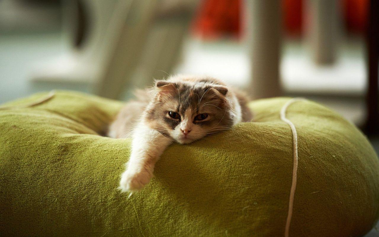 Lazy Cat Quotes. QuotesGram