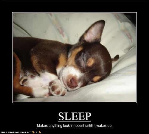 Sleepy Dog Quotes. QuotesGram