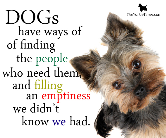 Who Wrote The Quote A Dog Is Man S Best Friend