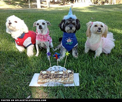 Birthday Quotes From Dogs. QuotesGram