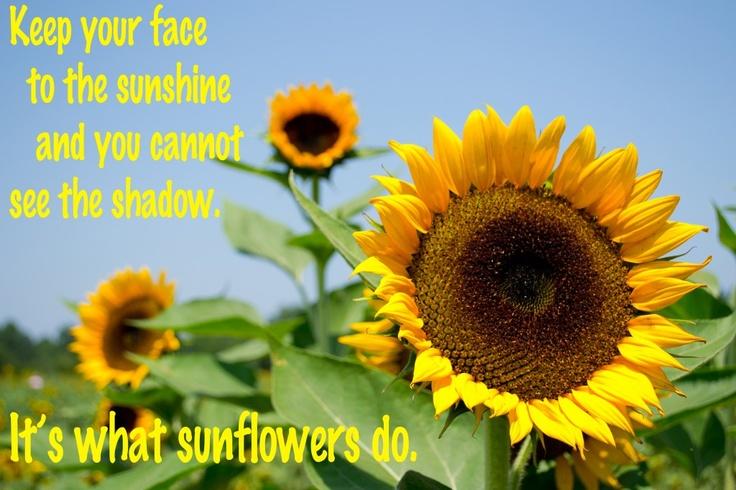 Beautiful Sunflower Quotes. QuotesGram