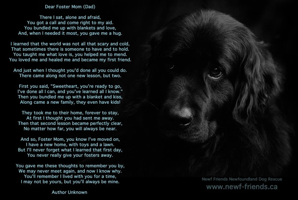 Rescue Dog Poems And Quotes Quotesgram