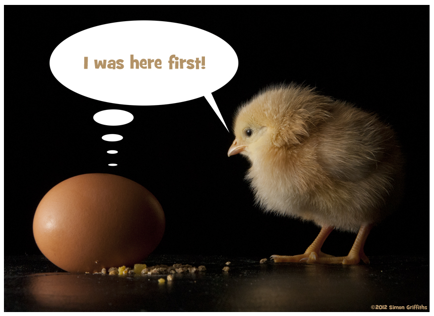 Chickens Good Quotes: Chicken And Egg Quotes. QuotesGram