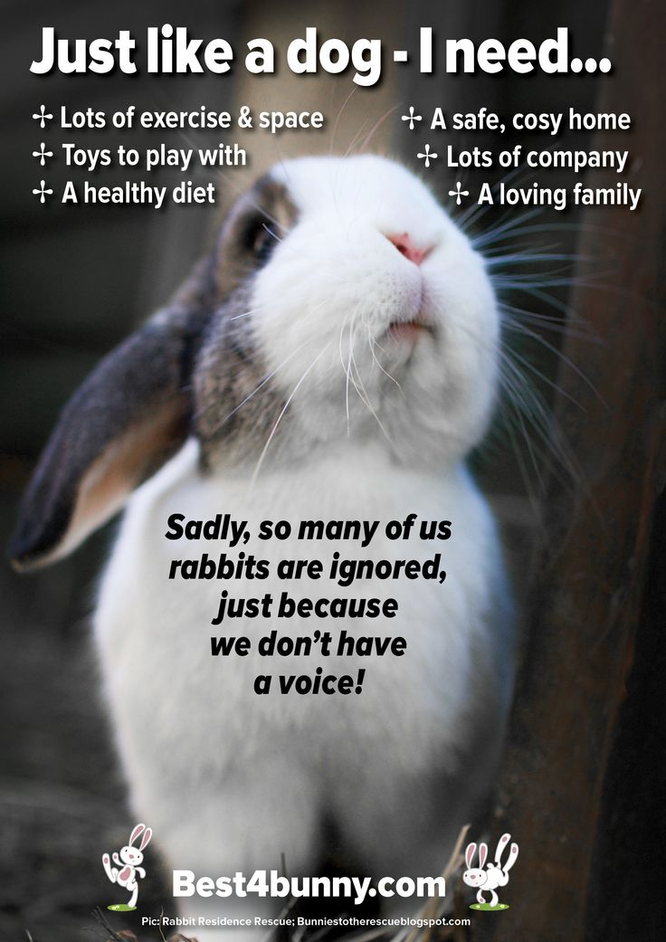 dog and rabbit relationship