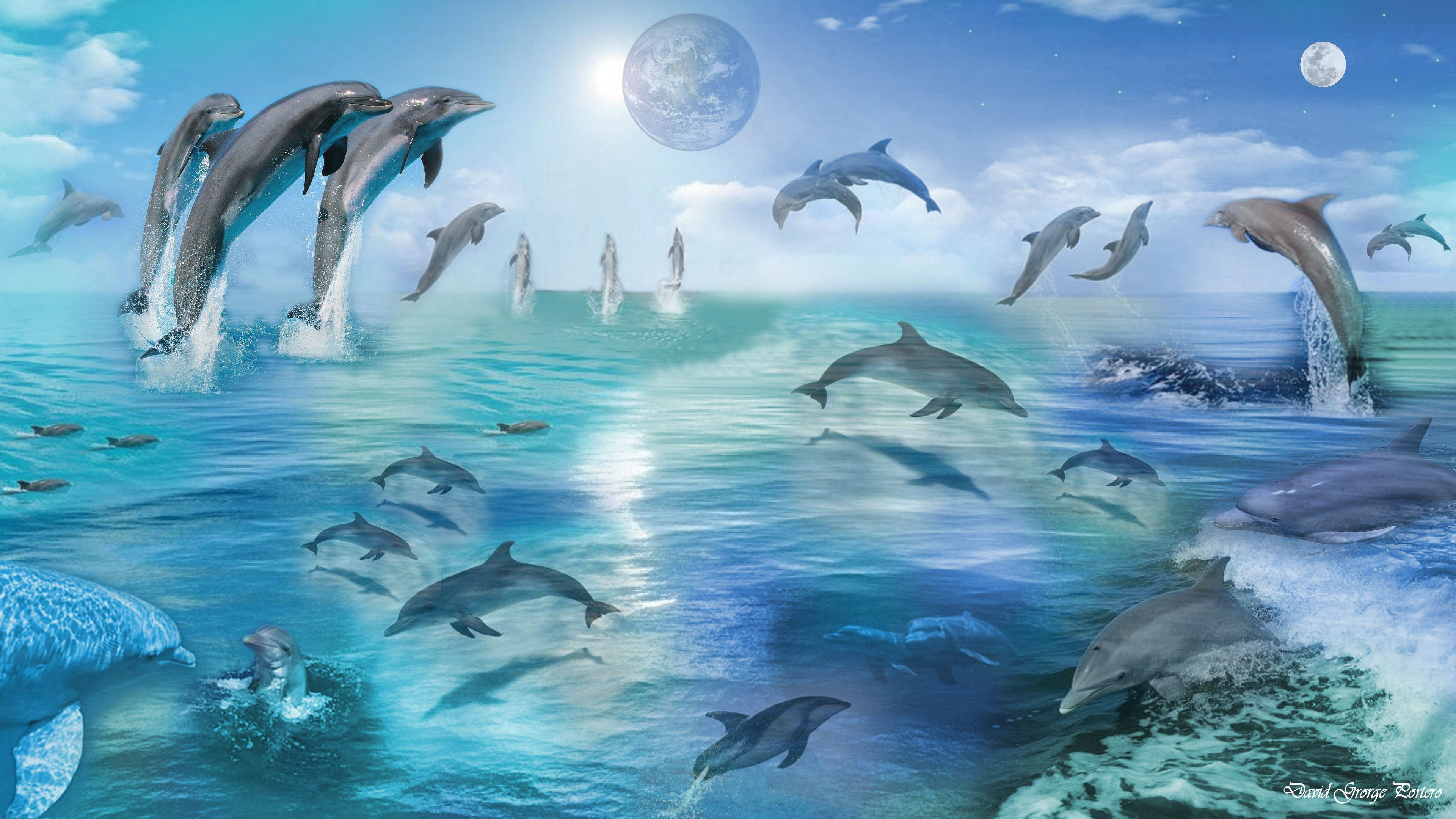 Cute Dolphin Cartoon Wallpaper